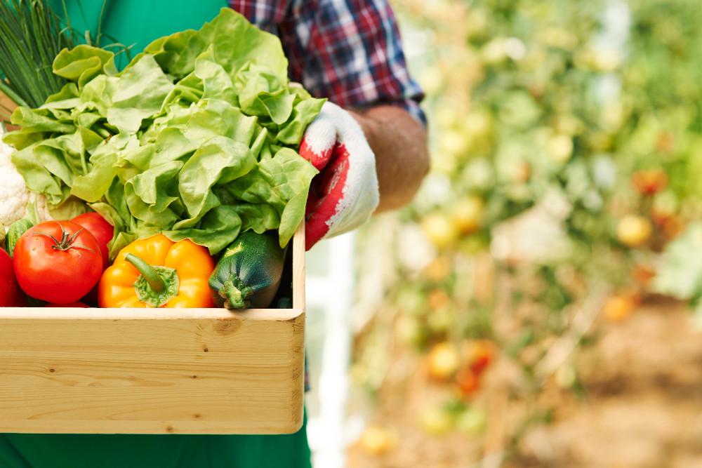 Abertas as inscrições para a 3ª oficina sobre agricultura familiar e alimentação escolar